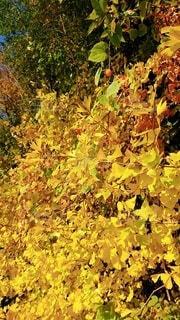 木の中で育つ植物の写真・画像素材[3924627]