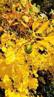 植物のクローズアップの写真・画像素材[3924628]