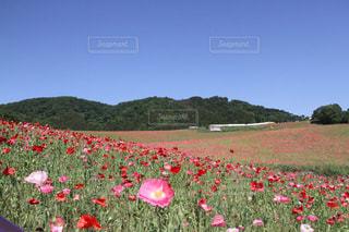 お花畑の写真・画像素材[162646]