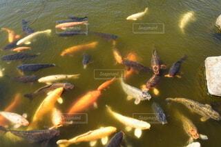 水のボウルの写真・画像素材[3834340]