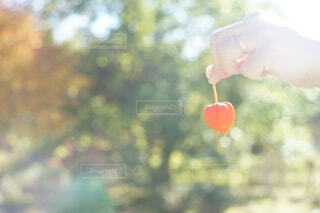 秋の光の中で…の写真・画像素材[3836222]