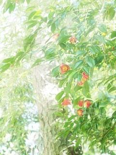 光に照らされる花の写真・画像素材[3868303]
