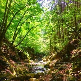 川苔山 登山 新緑 緑の写真・画像素材[3862980]