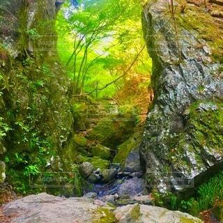 棒ノ折山 登山 苔の写真・画像素材[3862979]