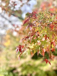 野山 ハイキング 紅葉の写真・画像素材[3923956]