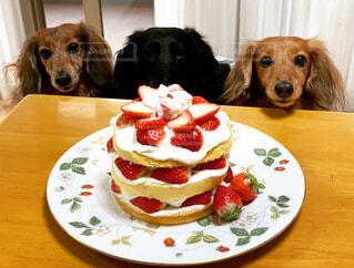 ケーキを心待ちにする犬の写真・画像素材[3841054]