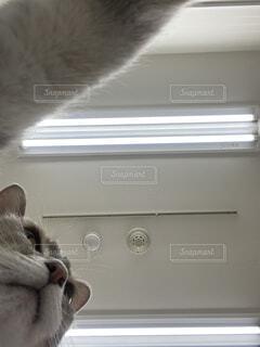 自撮りする猫の写真・画像素材[3943082]