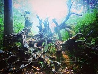 根をはって生きるの写真・画像素材[3841259]