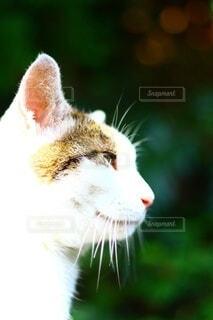何かを見つめる猫の写真・画像素材[3841263]
