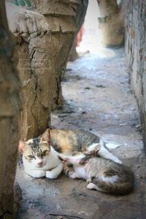 とある場所で出会った親子の野良猫の写真・画像素材[3845412]