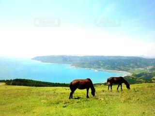 緑豊かな草原で放牧される馬の写真・画像素材[3846316]