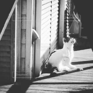 のんびり日向ぼっこする猫の写真・画像素材[3855836]