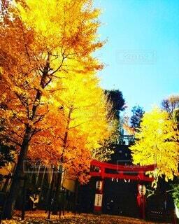 秋の彩りの写真・画像素材[3855839]