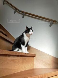 猫のいる暮らしの写真・画像素材[4538319]