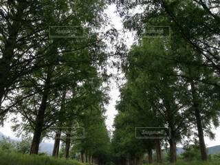 巨人の森の写真・画像素材[3854503]