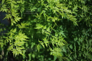 新緑の写真・画像素材[3846359]