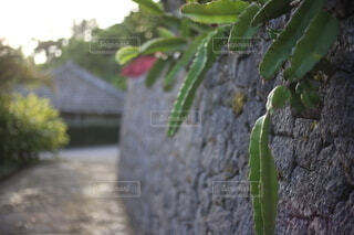 沖縄の、石垣の写真・画像素材[3846363]