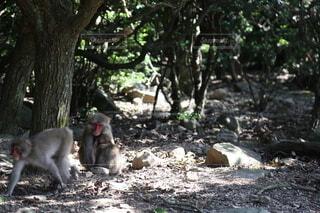 猿の親子の写真・画像素材[3846369]