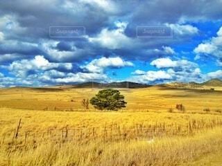 オーストラリアの大草原の写真・画像素材[3846377]