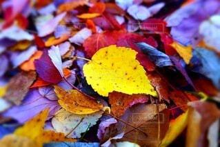 季節の変化の写真・画像素材[3883767]