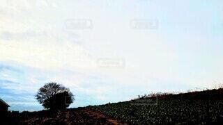 斜面に立つ木のシルエットと雲の多い空の写真・画像素材[4050192]