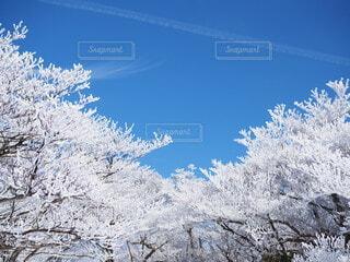 青空と樹氷の写真・画像素材[3855982]