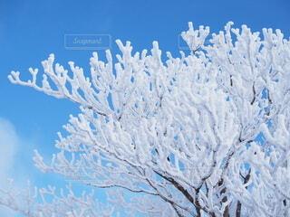 冬の木の写真・画像素材[3855983]