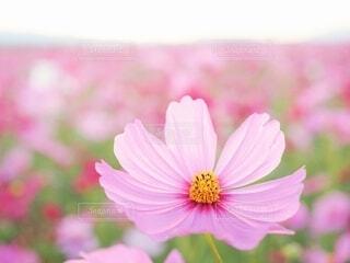 花のクローズアップの写真・画像素材[3856019]