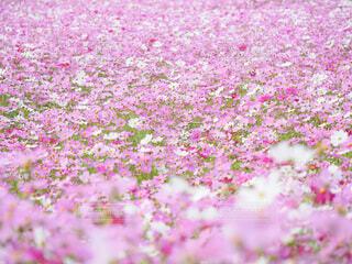 ピンクの世界の写真・画像素材[3856017]