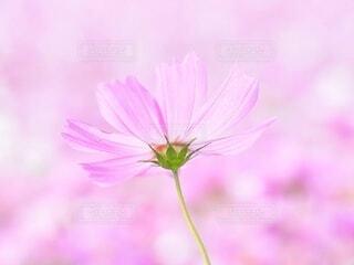 ピンクの世界の写真・画像素材[3856040]