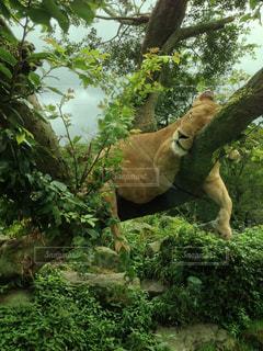 野生動物の写真・画像素材[172803]