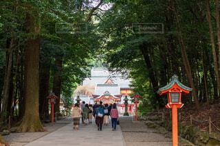 高千穂神社 拝殿に向かう人々の写真・画像素材[3924568]