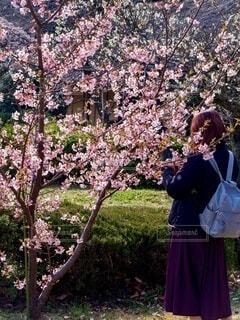 桜の木の傍らに女性の写真・画像素材[3961928]