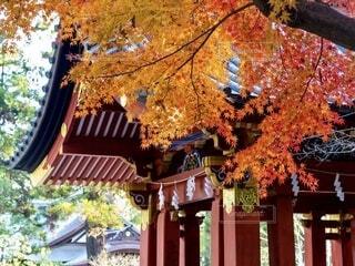 神社の紅葉の写真・画像素材[4005090]