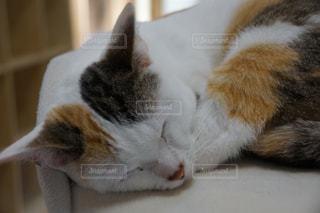 猫の写真・画像素材[162586]
