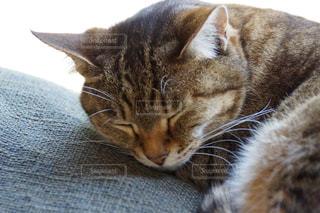 猫の写真・画像素材[162592]