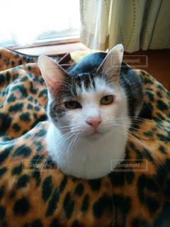 猫の写真・画像素材[340195]