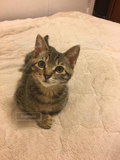 ベッドの上で横になっている猫の写真・画像素材[729053]