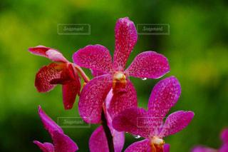 近くの花のアップの写真・画像素材[973278]