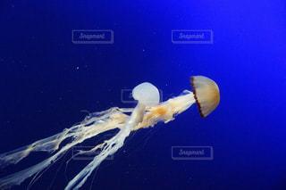 サンゴの水中ビュー - No.973284