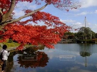 水に囲まれた大きな木の写真・画像素材[990442]