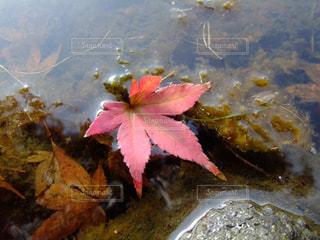 近くに池のアップ - No.990444
