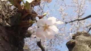 近くの木のアップの写真・画像素材[990445]