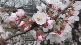 近くの花のアップ - No.990446