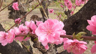 近くの植物にピンクの花のアップ - No.990449