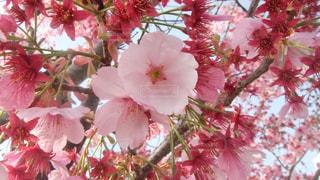 木の上のピンクの花で一杯の花瓶 - No.990450