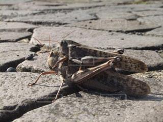 砂浜に立っている昆虫の写真・画像素材[990456]