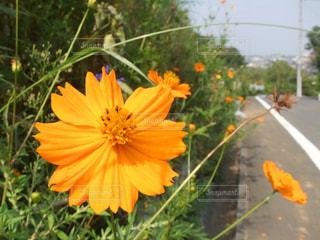 オレンジ色の花 - No.990472