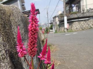 赤い花を着ている人の写真・画像素材[990473]