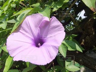 植物の紫色の花 - No.990474